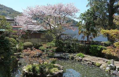 相生公民館の桜P1130221